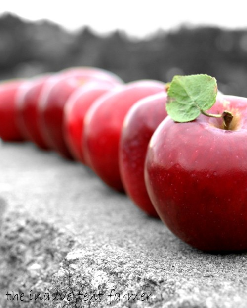 Little red apples all in a line...playing with my food again!