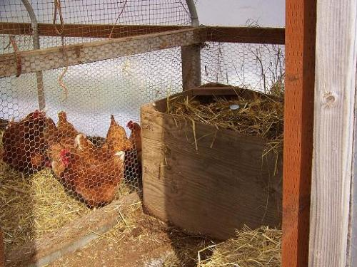hens and hotbed