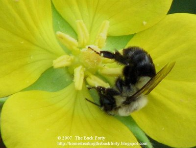 we love our pollinators!