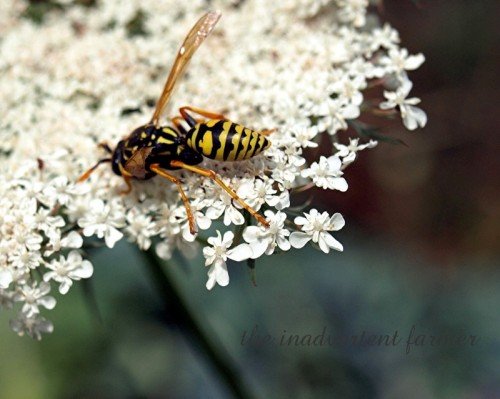 yellow jacket3