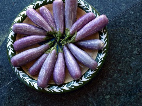 eggplant plate3