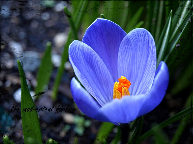 Sunday photosspring flowers not dabbling in normal my favorite spring mightylinksfo