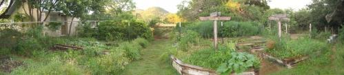 Our garden last year