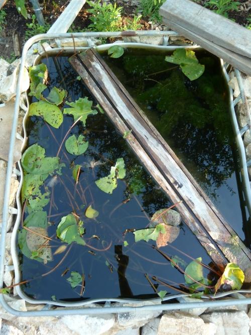 Oh Deer - water garden