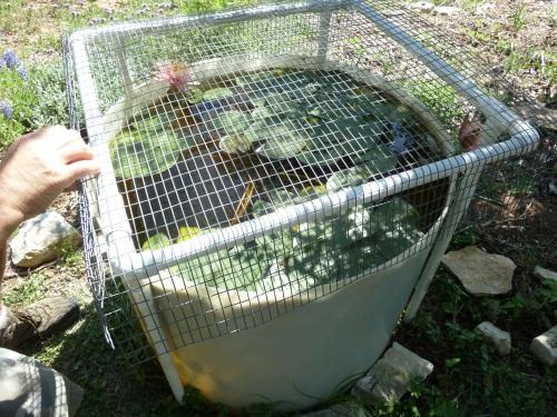 watergarden project 2