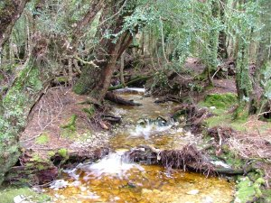 One of the small tributaries that flow together to form our river