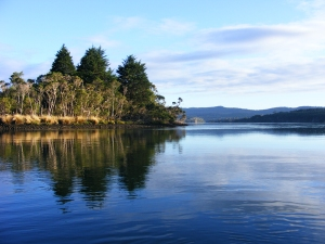 A lovely shot Steve took of Redwood Island, not far from Serendipity Farm