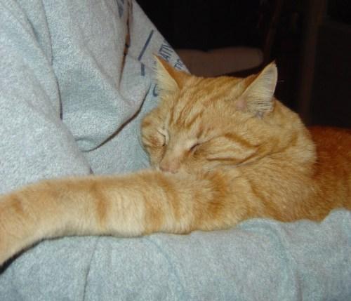 Kivuli has the right idea about nap time.