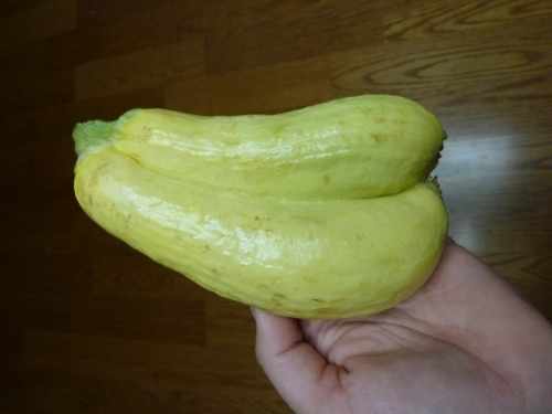 Double yellow squash - double good!