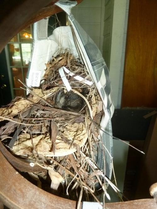 Wren Nest 1