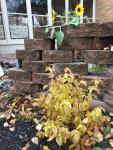 Fall color, Breezewaypatio